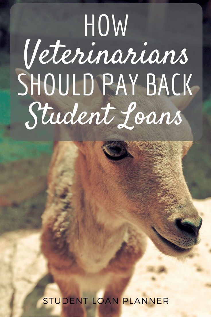 Here's a plan to help veterinarians pay back their student loans